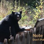 Note to Self: Don't Poke the Bear!